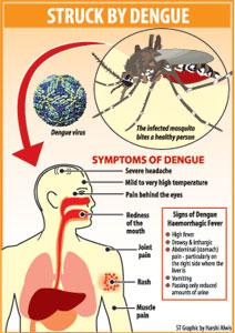 Dengue: The danger signals