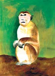 Toque Macaque (Macaca sinica)