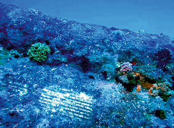 The Hermes wreck is covered in large black corals, with large schools of snapper and barracuda, along with some potato cods and lots of dogtooth tuna