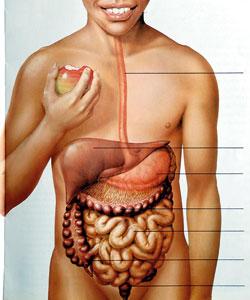 Small bowel polyps barium study