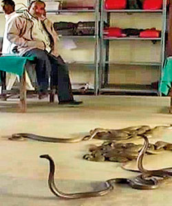 Angry Indian farmers give snakes to alleged bribe seekers