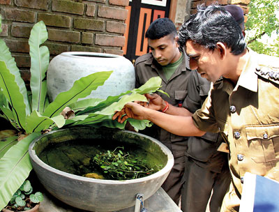 How to prevent dengue during monsoons-clean flower pots