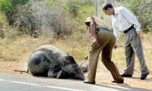 The baby elephant was thrown thirty metres