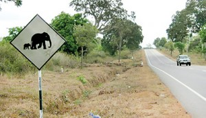 Sign boards clearly indicate elephant crossings.