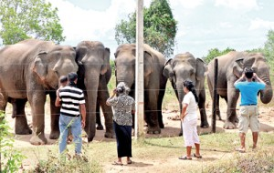 The worst ever drought in several districts has affected not only hundreds of thousands of people but also turned elephants into virtual beggars. Several hungry and thirsty elephants are seen waiting near the fence at Uda Walawe for passersby to give them something to eat or drink. Pic by Mangala Weerasekera.