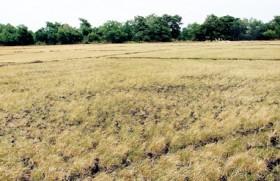Weatherman has no good news as drought destroys crops