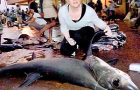 Ban slapped on mackerel shark fishing