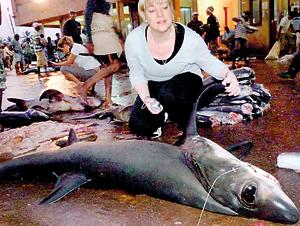 Protected shark at a local fish market