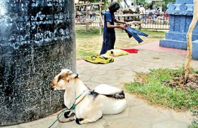 Kovil defiant on animal sacrifice
