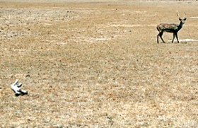 Dry weather here due to global climatic changes
