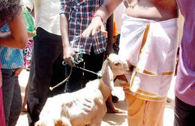 Poosari: Police prevent  transport of animals to Munneswaram Kovil