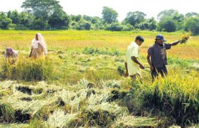 Improving agricultural productivity:  Increase farmer incomes, reduce prices of food items and increase exports