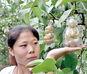 A woman demonstrates a baby-shaped pear in Handan city,