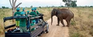 Elephant at Udawalawe