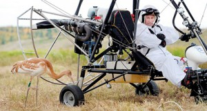 Putin is for the birds: The Russian President looks at a crane as he sits in the motorized deltaplane (REUTERS)
