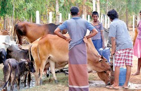 Desperate farmers seek help
