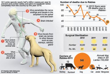 Rabies bite in humans