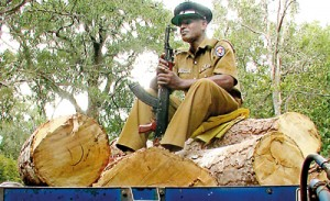 A policeman 'sits guard' over illegally felled timber