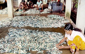 With large quantities of fish on offer, fishermen are at the mercy of  private businessmen
