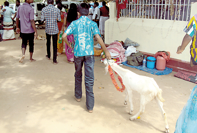 Animal sacrifice at kovil: No permanent solution arrived at as yet