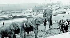 An obituary for long-dead elephants