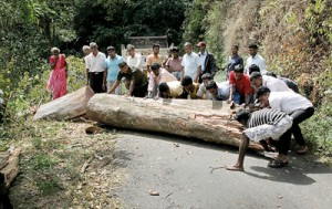 No rush: Clearing a fallen tree with much laughter. Pix by M.A. Pushpa Kumara