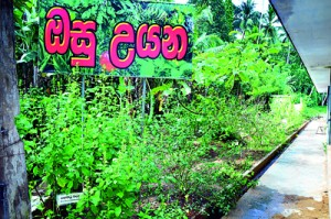 Herbal and Agriculture Garden