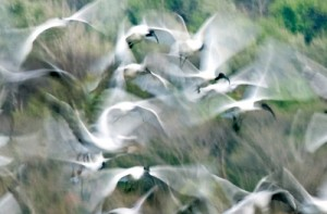 The overall winner: Asela Karunarathne, (Above left) and his winning photo  in the 'Behaviour of Birds' category