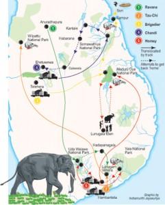 Elephant-translocated