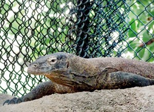 Three endangered animals are the zoo's latest additions