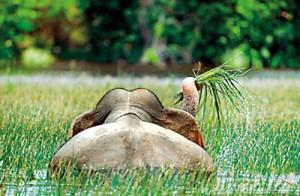 Best in Behaviour of Mammals:  Dr. Janaka Gallangoda's entry