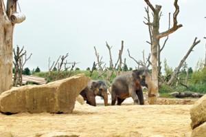 'Uda Walawe'  elephant habitat and walkway at Twycross Zoo in the Midlands,  England