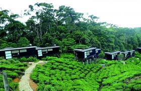 The Rainforest Ecolodge opens, celebrates LEED Platinum Award for sustainable tourism
