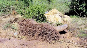 Drought: Dry soil due to lack of ground water