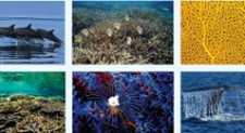 ICUN 2013 desk calendar features 'Marine Wonders'