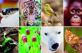 Biodiversity, the diversity of life