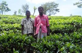 Outgrower system succeeds at Endana Estate
