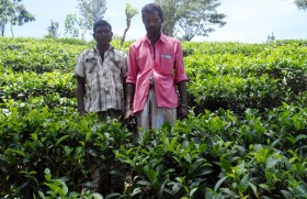 Crisis-hit Lankan tea industry needs re-engineering : Forbes report