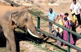 Feeding wild elephants is high-risk entertainment