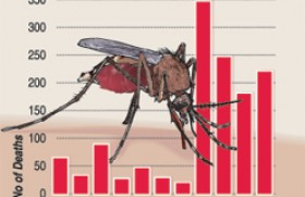 Dengue: Take it more seriously,  say  health officials