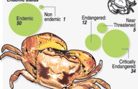 Endemic freshwater crabs under threat, need protection: Experts
