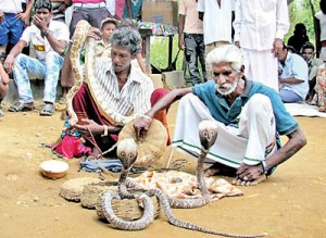 Two gypsy men with their collection of snakes