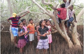 Mangrove Rangers in Kokilai – Students gain an insight in to mangrove ecosystems