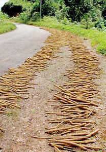 A common sight along the  Kukule-Molkawa road