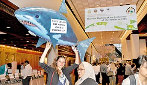 Activists canvassing for the shark vote at the Bangkok conference