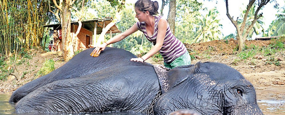 Vacationing with elephants