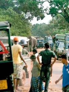 Gamunu the elephant has been photographed and videographed on many occasions foraging inside vehicles that block his way.