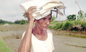 H.P. Babe: A widow sho hasnt received pension benefits for more than a year. Pix by Karuwalagawewa Jayarathne