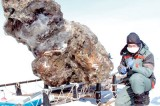 Woolly mammoths could be brought back from extinction