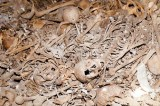 Palestinian victims of 1948 war found in mass grave in Tel Aviv
